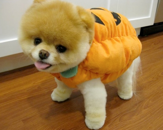 25 Adorable Pet Costumes
